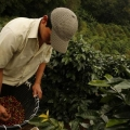 Sr. David Gonzalez - Productor de Café - Provincia del Guayas