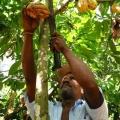 Sr. Esteven López - Productor de Cacao - Provincia del Guayas